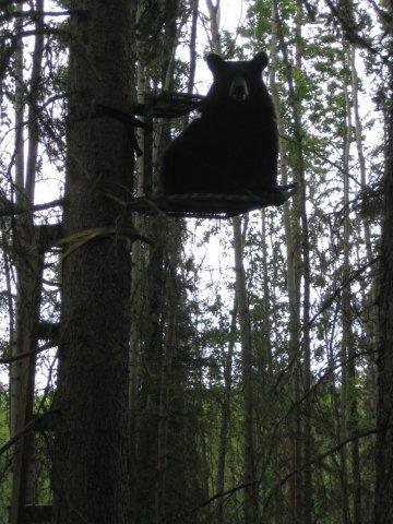 Big Dog Bdf-4Bearcat XL Fixed Position Hang-on Treestand With