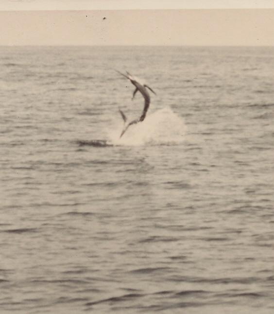 SailfishJumping